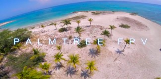 Palm-Tree-FPV-Aruba-RAW
