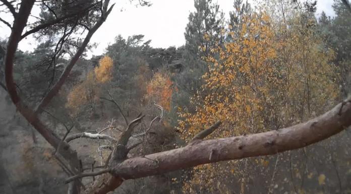 Sad-Forest