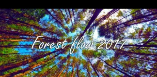 Forest-flow-2017-FPV-freestyle