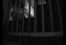 Houdini-Chihuahua-escapes-from-prison-kitchen