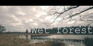Wet-forest-FPV-freestyle-CINEMATIC-nature-edit-TIMELAPSE