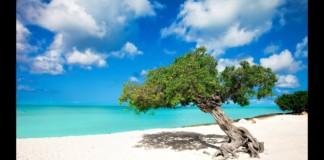 Aruba-Leisurely-Edit-Sassy-FPV