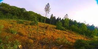 Sunset-pine-flow-FPV-freestyle