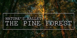 Natures-ballet-The-Pine-Forest-a-Time-lapse-journey-Cinematography-FPV-freestyle