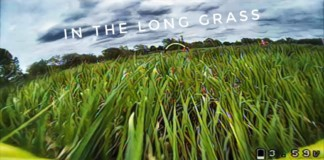 In-the-long-grass-MAS5-Practice